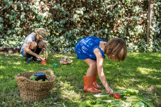 Bambino che raccoglie le verdure nel giardino