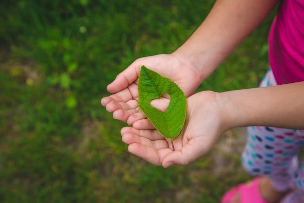 Il bambino tiene una foglia tra le mani, per proteggere la natura. messa a fuoco selettiva. ragazzo.