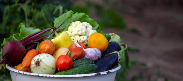 Il bambino tiene le verdure nelle sue mani. verdure in una ciotola in fattoria. prodotto biologico dell'azienda agricola. messa a fuoco selettiva. natura