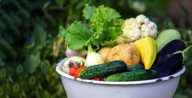 Il bambino tiene le verdure nelle sue mani. verdure in una ciotola in fattoria. prodotto biologico della fattoria