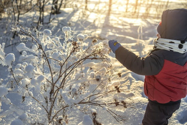 Un bambino sta giocando con la neve in una gelida giornata di sole invernale tra gli alberi all'aperto al tramonto