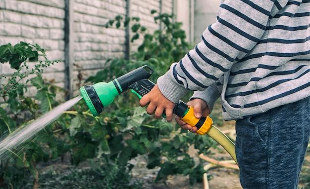 Il bambino sta annaffiando cespugli e piante in giardino