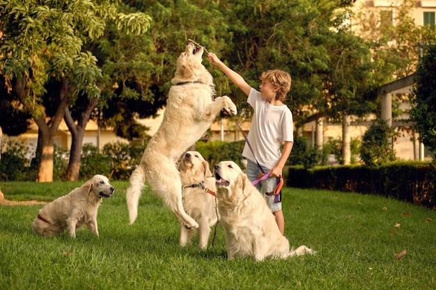 Bambino che gioca con i cani nel parco