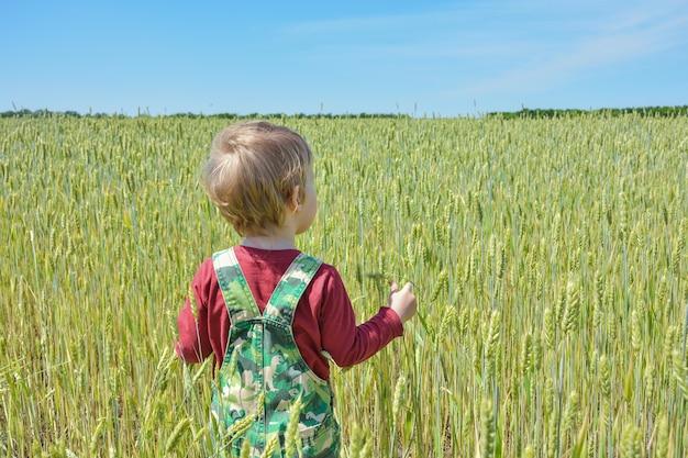 Bambino in un campo di grano sta con le spalle allo spettatore, piccolo bambino cammina in un campo di grano