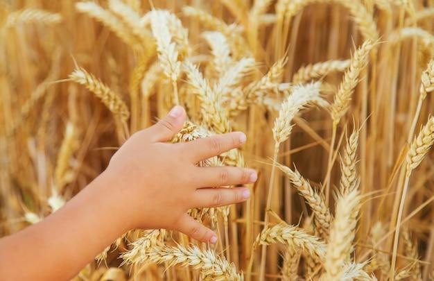 Bambino in un campo di grano in una giornata di sole