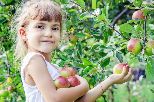 Bambino con le mele nel giardino estivo. messa a fuoco selettiva.