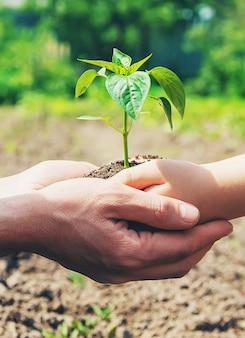 Un bambino con suo padre pianta un vivaio