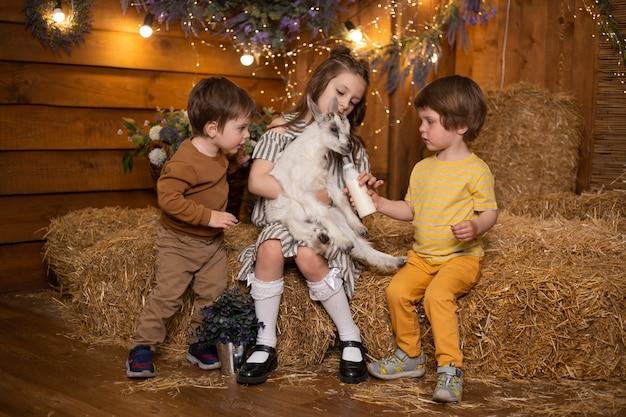 Ragazzi e ragazza dei bambini che giocano con la capra in granaio in azienda agricola che si siede in covoni di paglia