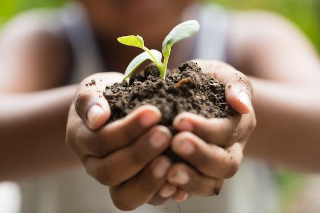 Bambini che tengono la giovane pianta della piantina in mani sulla pianta