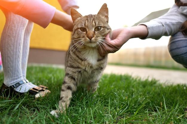 Mani dei bambini accarezzando il primo piano del gatto