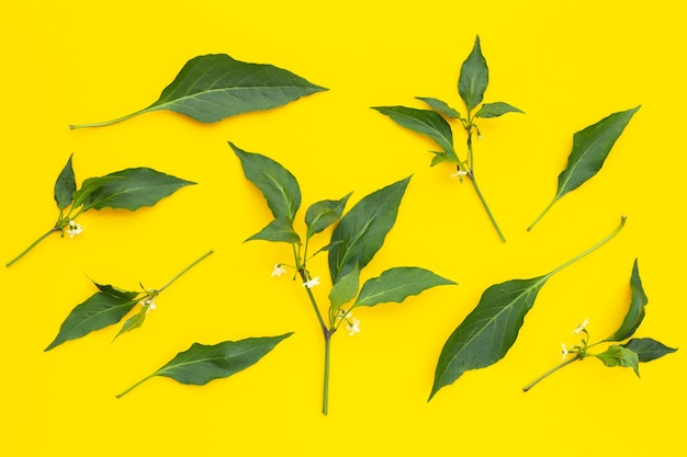 Foglie di peperoncino rosso con fiore sulla superficie gialla