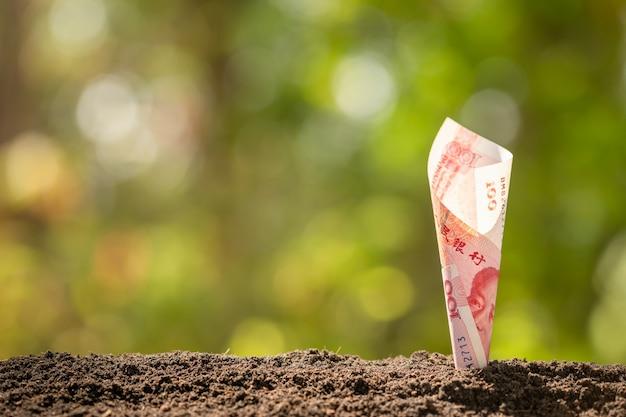 Banconota cinese (100 yuan) che cresce nel suolo con il fondo verde della sfuocatura della natura. il business cresce concetto