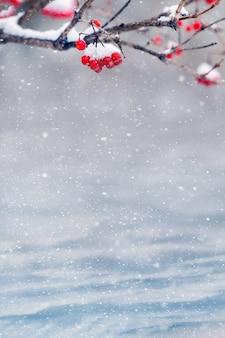 Cartolina di natale con viburno rosso coperto di neve su uno sfondo di cumuli di neve durante una nevicata e spazio libero per il testo, spazio di copia
