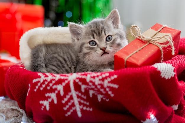 Il gatto di natale si trova con un regalo sotto l'albero di capodanno. gattino animale con scatola regalo per natale su brutto maglione natalizio all'interno della casa.