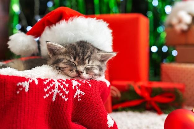 Gatto di natale. gattino addormentato in cappello rosso di babbo natale vicino all'albero di scatole regalo. felice anno nuovo animale