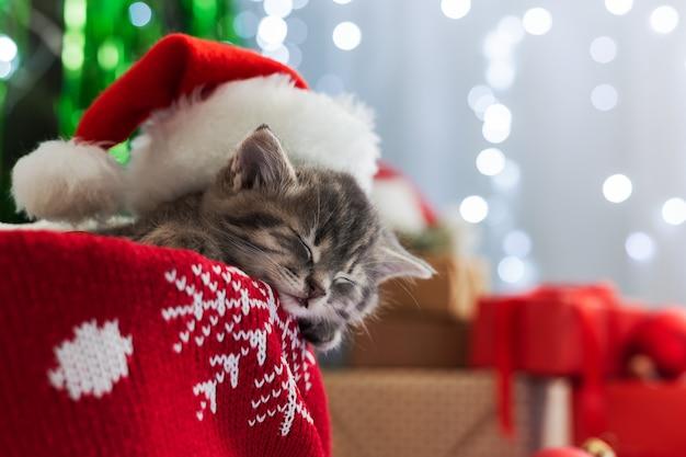 Gatto di natale che dorme nel cappello di babbo natale