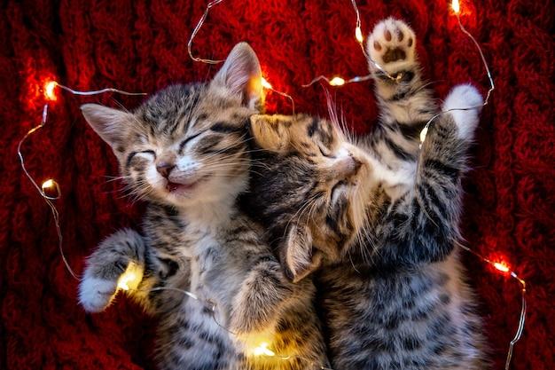 Gatti di natale. due piccoli gattini a strisce svegli che dormono su priorità bassa rossa. gattino con il natale