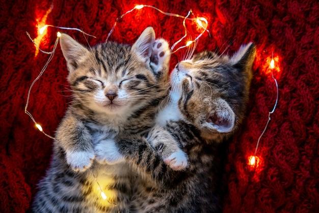 Gatti di natale. due simpatici gattini a strisce che dormono con una ghirlanda di luci sul rosso
