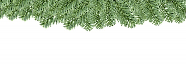 Bordo sempreverde dell'albero di abete di natale, isolato su priorità bassa bianca