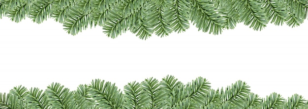 Blocco per grafici sempreverde dell'albero di abete, isolato su priorità bassa bianca