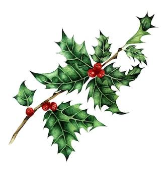 Illustrazione natalizia di un rametto di agrifoglio immagine festiva tradizionale isolata su sfondo bianco