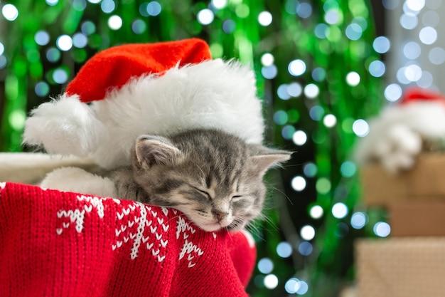 Gattino di natale che indossa il cappello di babbo natale che dorme accanto ai regali di luci dell'albero.