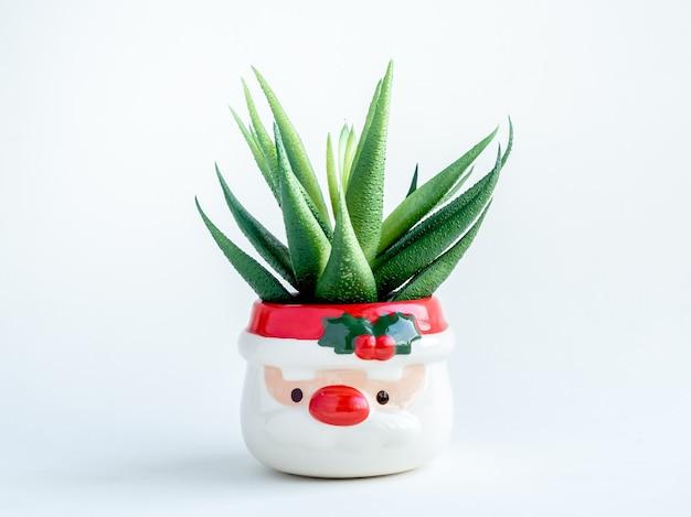 Concetto di oggetto di natale, pianta succulenta verde in vaso per piante a forma di babbo natale carino isolato su bianco.