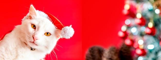 Animale domestico di natale. gatto bianco con berretto natalizio su sfondo natalizio. formato all'aperto