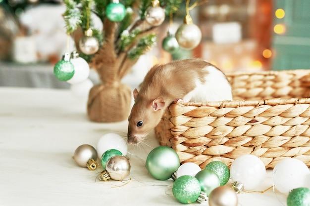 Ratto di natale simbolo del nuovo anno 2020. anno del ratto. capodanno cinese 2020. giocattoli di natale, bokeh. ratto sullo sfondo di decorazioni natalizie. nuovo anno del modello della cartolina d'auguri di natale