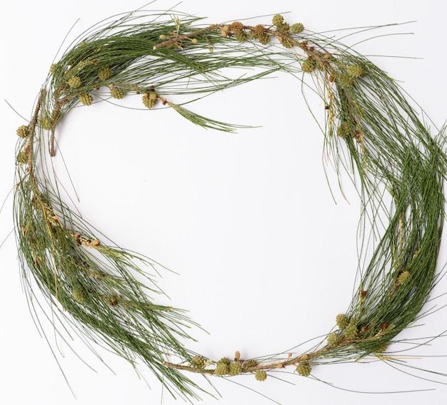 Pigne stagionali di natale e telaio di ramo verde fresco su sfondo bianco, piatto laici