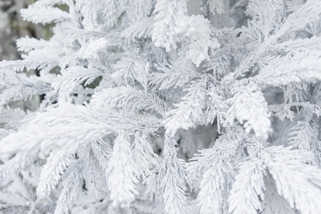 Albero di natale con brina ghiacciata sui rami