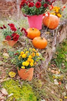 Crisantemo in vasi di fiori e zucche arancioni nei giardini di autunno vicino al vecchio muro di mattoni