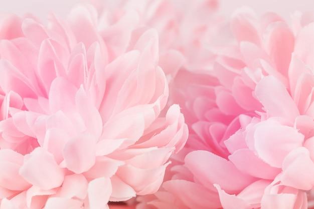 Fiori di crisantemo in tenui colori pastello e sfocatura dello sfondo