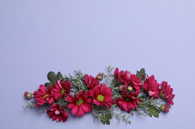 Fiori di crisantemo e rami di thuja su sfondo viola, spazio per il testo