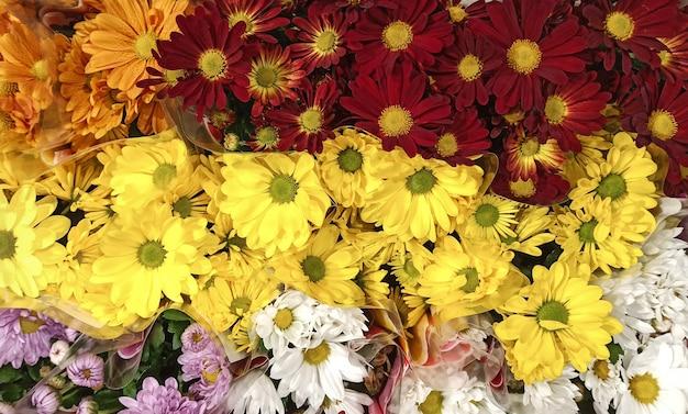 La stagione della fioritura dei crisantemi. molti fiori di crisantemo che crescono in vasi in vendita nel fioraio