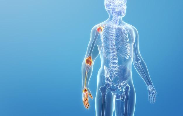 Cinema 4d rendering della struttura articolare della gamba destra del corpo umano