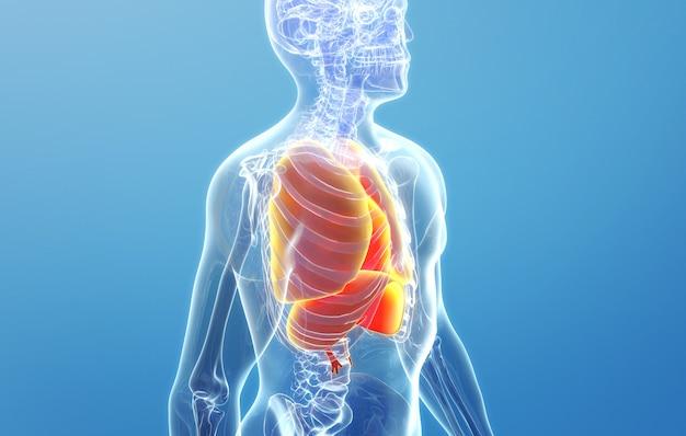 Cinema 4d rendering della struttura del polmone umano