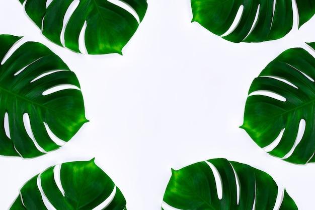 Cerchio. foglie di monstera tropicale verde esotico isolato su priorità bassa bianca. design per biglietti d'invito, volantini. modelli di design astratti per poster, copertine, sfondi con copyspace per il testo.