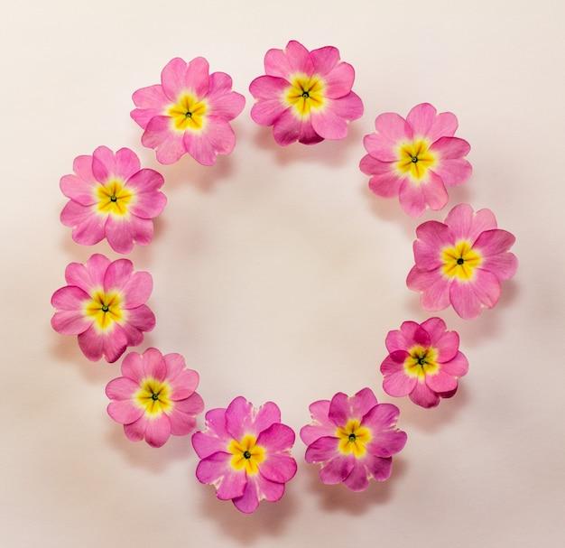Cornice floreale circolare di fiori di primula rosa con spazio per il testo. vista piana, vista dall'alto