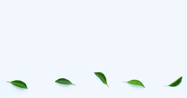 Foglie di agrumi su superficie bianca. copia spazio