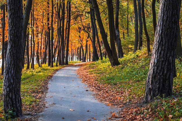 Parco centrale della città durante la stagione autunnale.