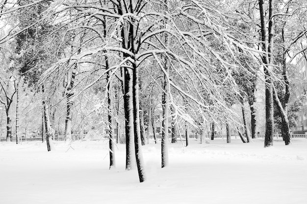 Parco cittadino dopo la nevicata. immagine grafica in bianco e nero del w