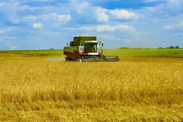 Pulizia, falciatura di grano segale, grano con macchine agricole, mietitrebbia