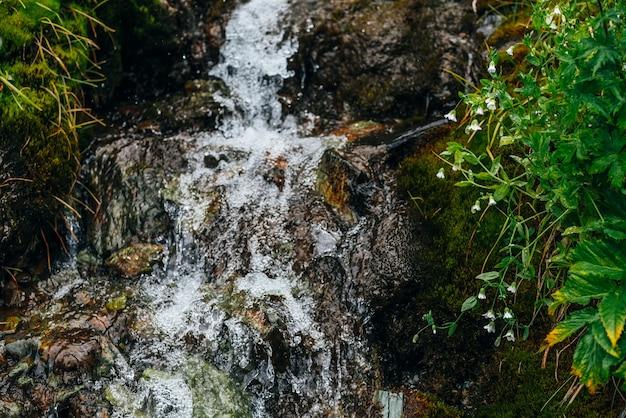 Ruscello di acqua sorgiva limpida tra muschio denso e vegetazione lussureggiante