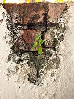 Pianta verde rampicante che cresce su un muro di mattoni antichi di una casa abbandonata sfondo in stile retrò