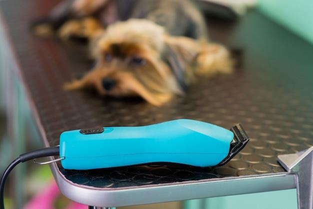 Clipper con il cane nel salone di toelettatura