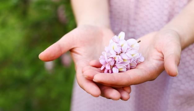 Primo piano del fiore dell'acacia tenuto in mani