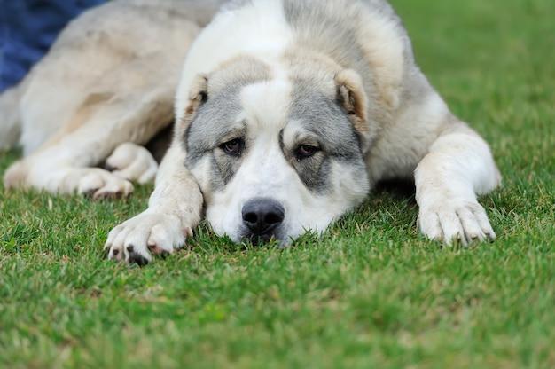 Close up adorabile cane in estate erba verde