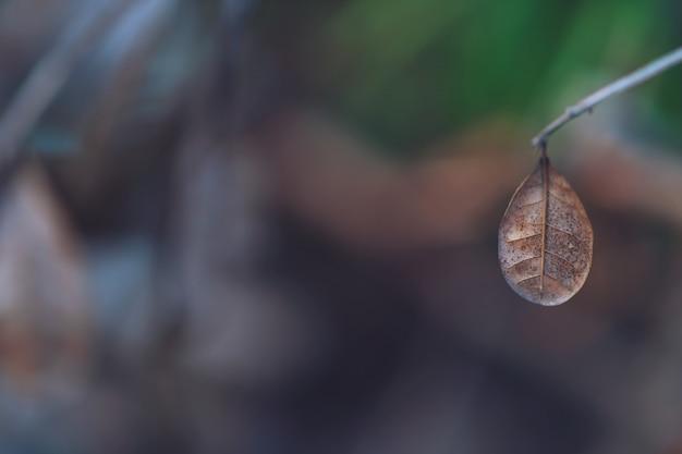 Chiuda in su dei fogli di autumn dry