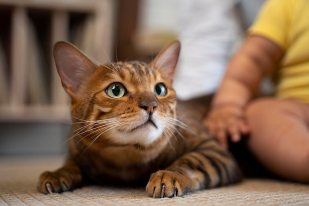 Close up bambino e simpatico gatto